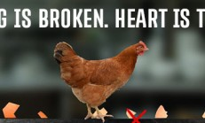 egg is broken. heart is too. İndir Yükle