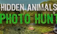Hidden Animals: Photo Hunt. Seek and Find Objects Game İndir Yükle