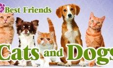 My Best Friends – Cats & Dogs İndir Yükle