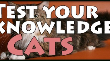 Test your knowledge: Cats İndir Yükle